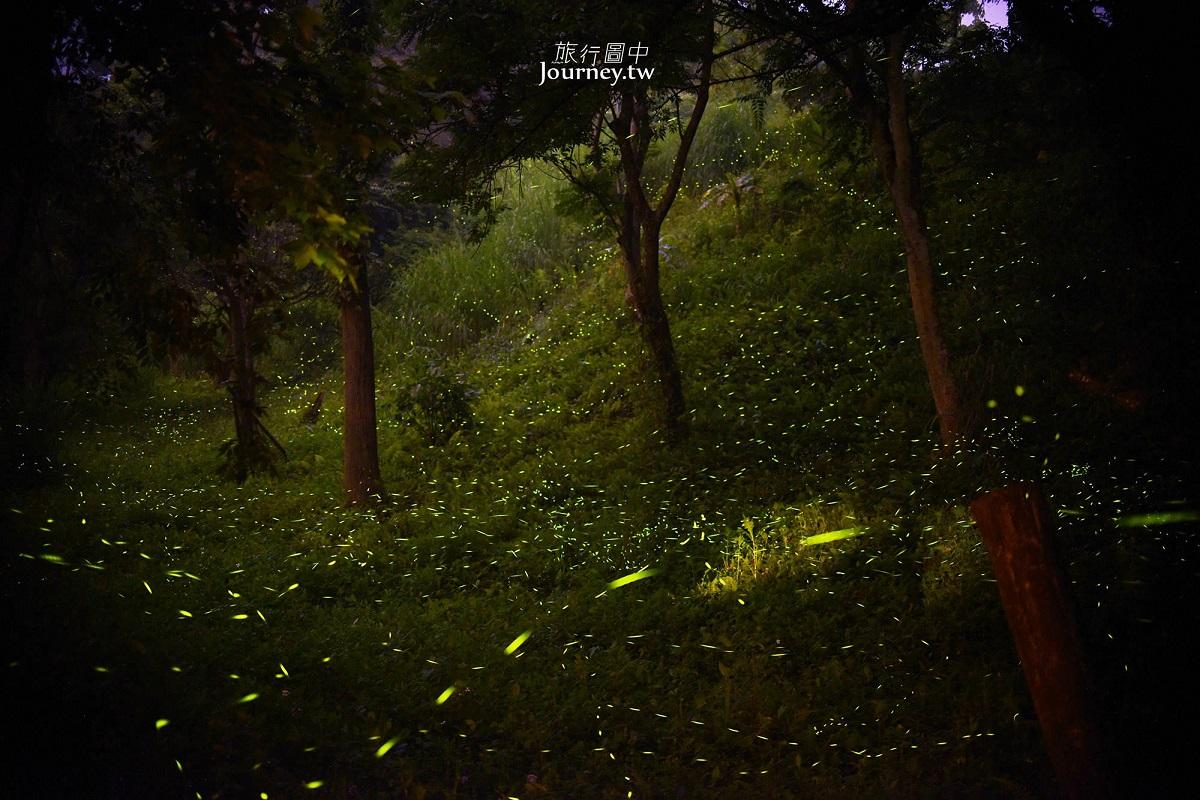 晚上可以看到很多萤火虫