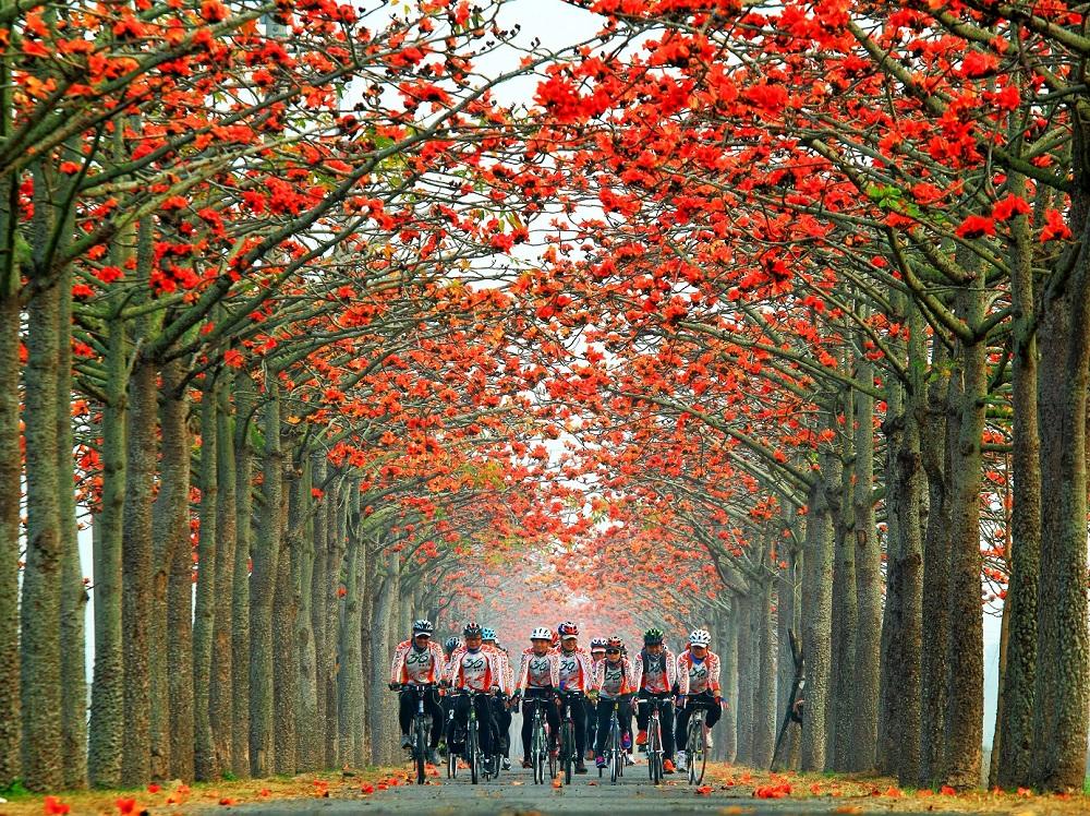 花季时单车骑行 梦幻体验