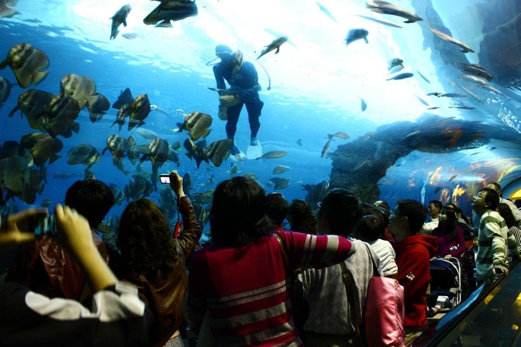 珊瑚王国馆-海底隧道