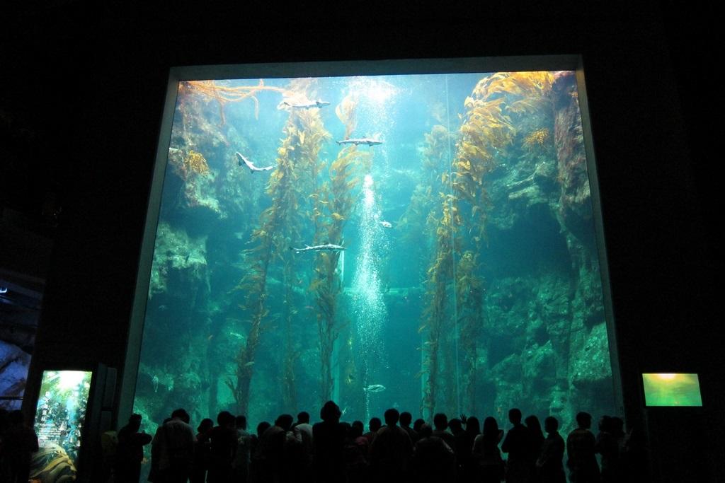 世界水域馆-黄金巨藻展示缸