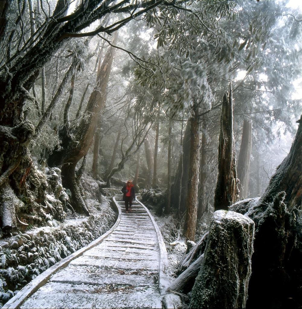 森林步道雪景